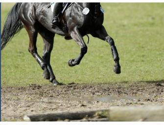 Montelibretti: Deutsche Junioren und Junge Reiter führen Busch-EM in Einzel- und Mannschaftswertung weiter an