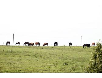 Unfall auf der Autobahn 65: Sechs tote Pferde