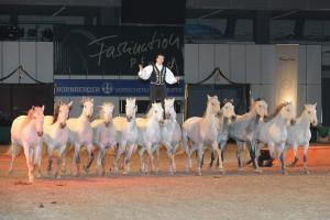Faszination Pferd/afag.de