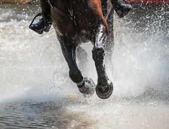WM junge Vielseitigkeitspferde: Trakehner und Holsteinerin in Front