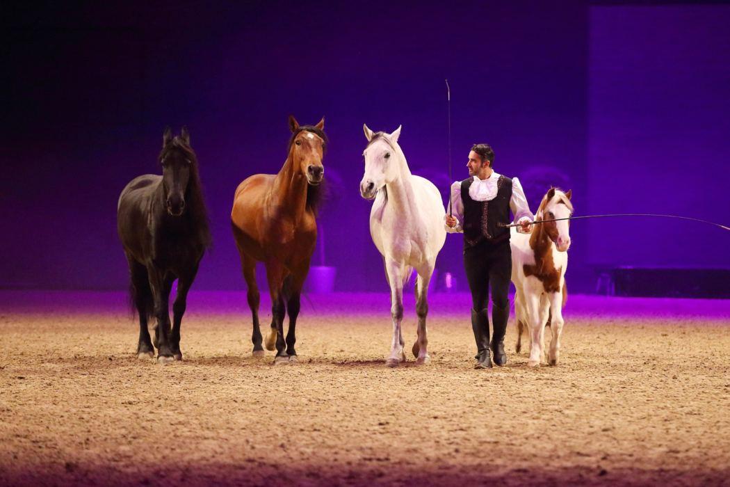 gewinnspiel pferd international