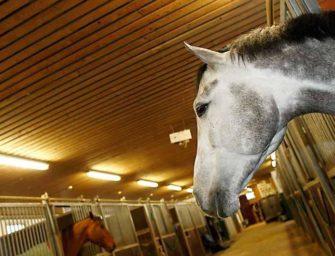Düsseldorf: Zwei weitere Pferde mit infektiöser Anämie infiziert