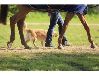 Gewinnspiel: Training für den Turnierhund zu gewinnen