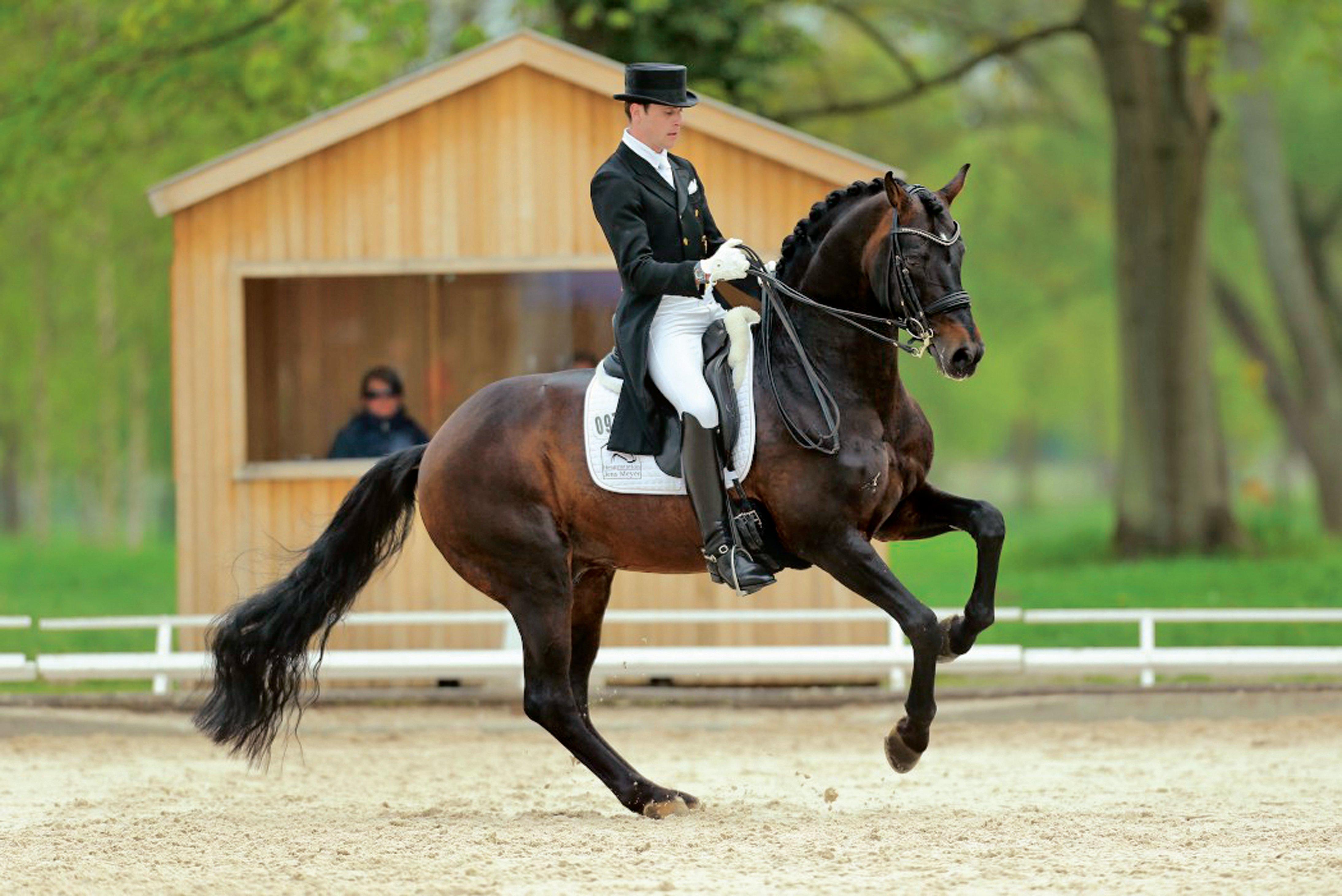 картинки с лошадьми и всадниками