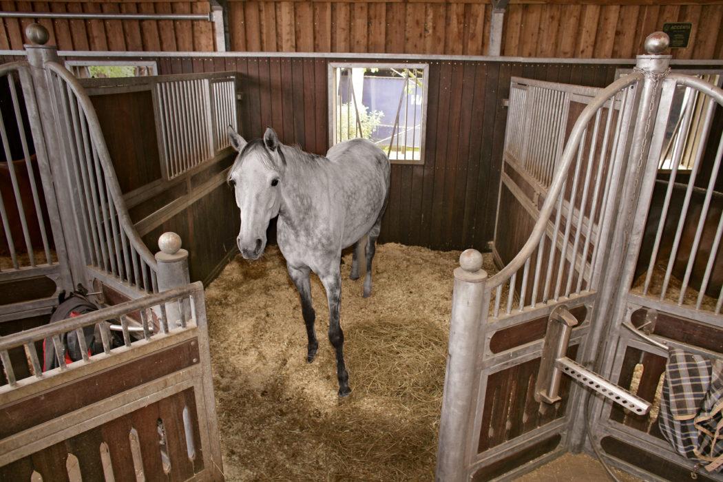 frau lässt sich vom pferd befriedigen