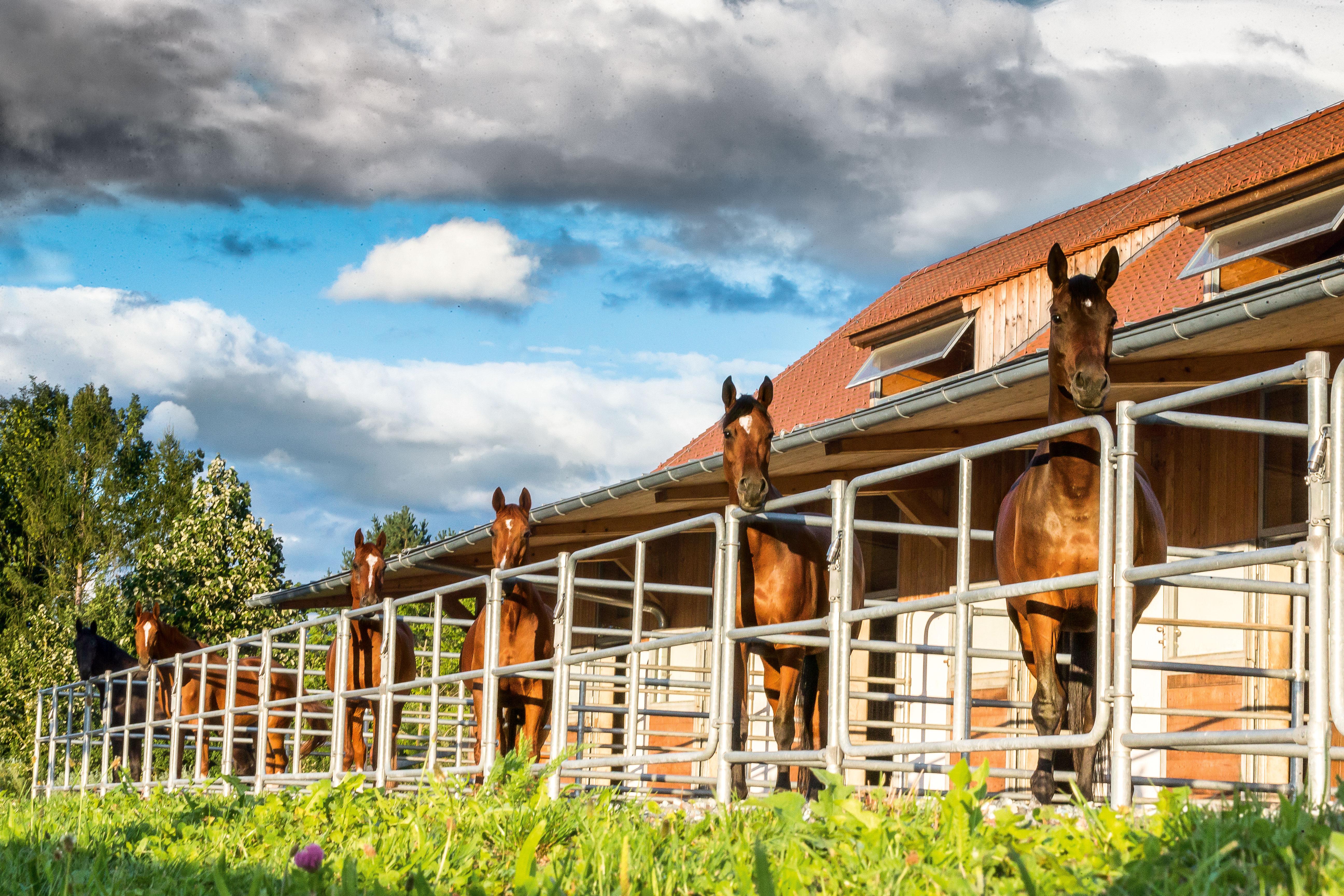 Luxus Pferdestall vom traum den eigenen pferdestall zu bauen st georg