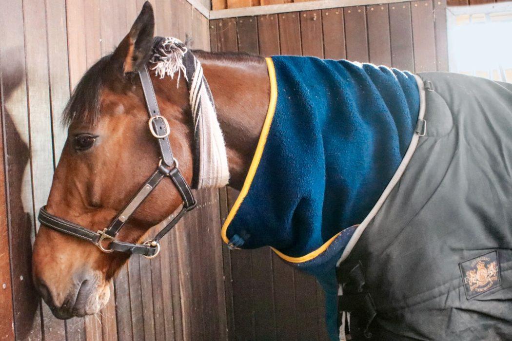Herpes Impfung Pferd