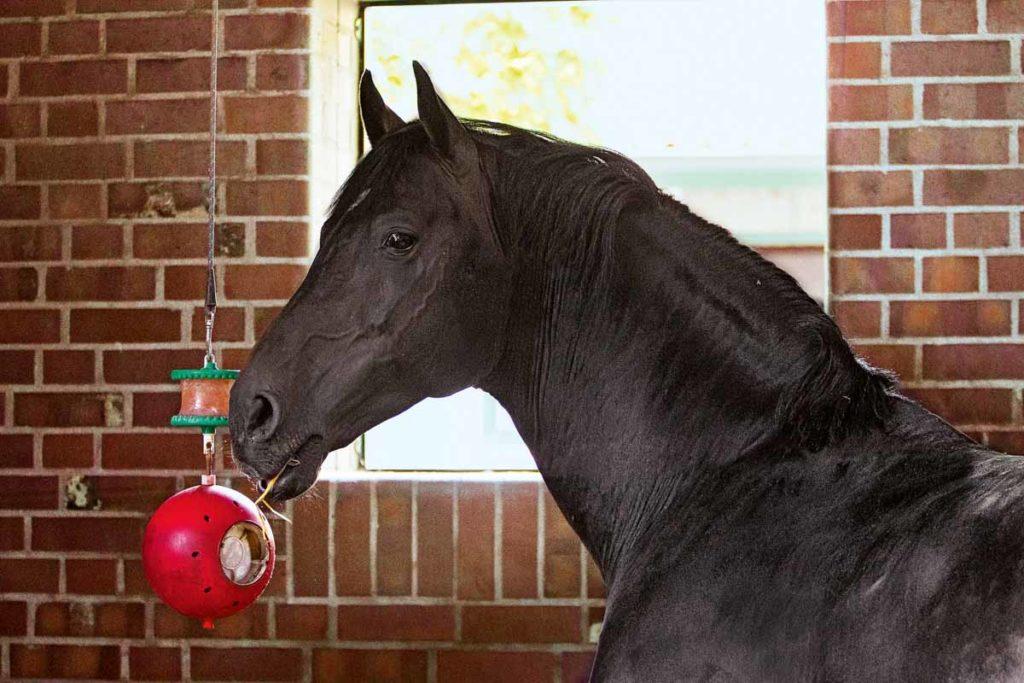 Pferdespielzeug von spielball bis knabberholz st georg