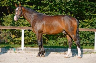 Das Exterieur Des Pferdes Von Körperbau Und Körperteilen