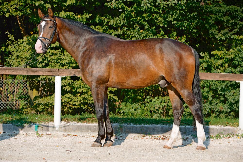 Das exterieur des pferdes von k rperbau und k rperteilen for Exterieur beurteilung pferd