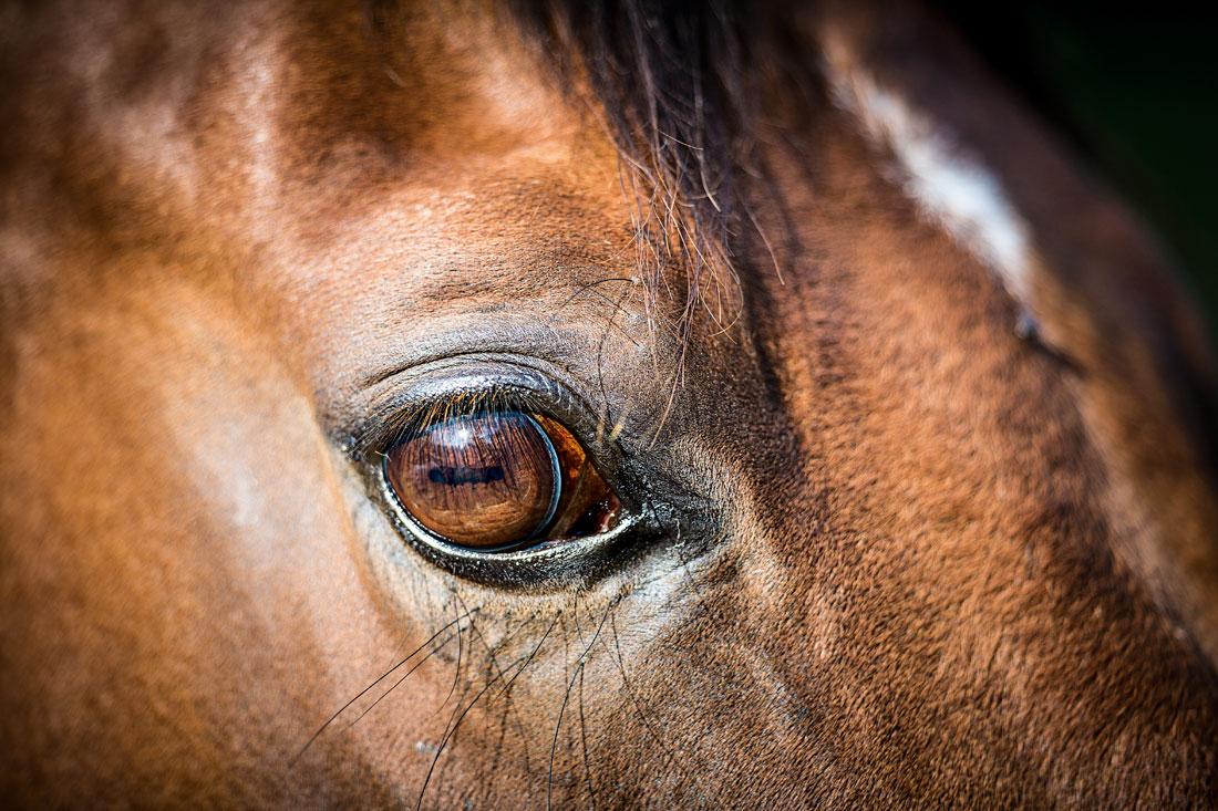 Mit den Augen des Pferdes sehen & Probleme im Pferdeauge erkennen ...