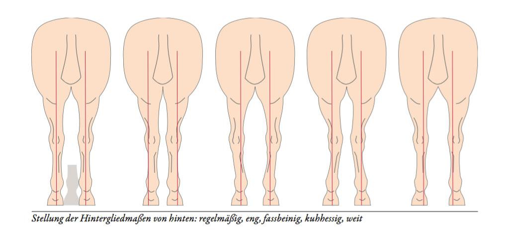 Das Exterieur des Pferdes - von Körperbau und Körperteilen - St.GEORG