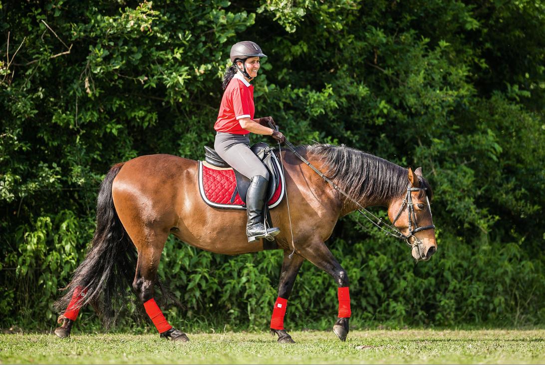 wie schnell soll ein pferd abnehmen