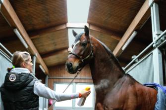 Fliegenspray Pferd Bremsen Und Mucken Einfach Abwehren
