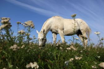 Achtung Giftig Giftpflanzen Für Pferde